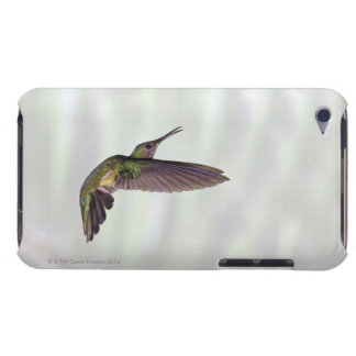Green-crowned Brilliant Heliodoxa jacula female Barely There iPod Covers