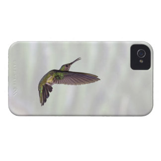 Green-crowned Brilliant Heliodoxa jacula female iPhone 4 Case-Mate Case