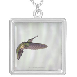Green-crowned Brilliant Heliodoxa jacula female Silver Plated Necklace