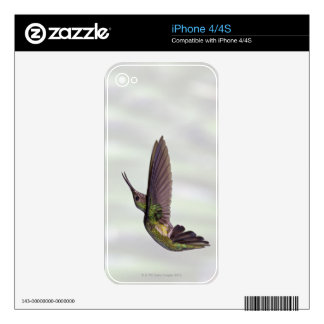 Green-crowned Brilliant Heliodoxa jacula female Skin For iPhone 4S