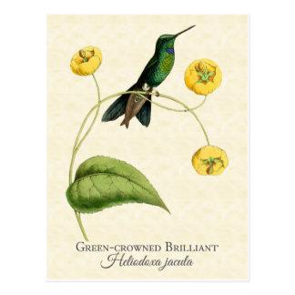 Green Crowned Brilliant Hummingbird Art Postcard