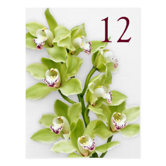 Green Cymbidium Orchid Floral Wedding Table Cards