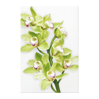 Green Cymbidium Orchid Flower Wrapped Canvas Print