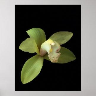 Green Cymbidium Orchid Poster