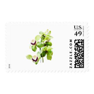 Green Cymbidium Orchids Stamp