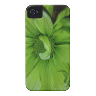 Green Daisies iPhone 4 Cover