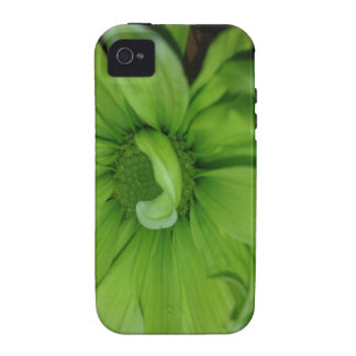 Green Daisies iPhone 4/4S Cases