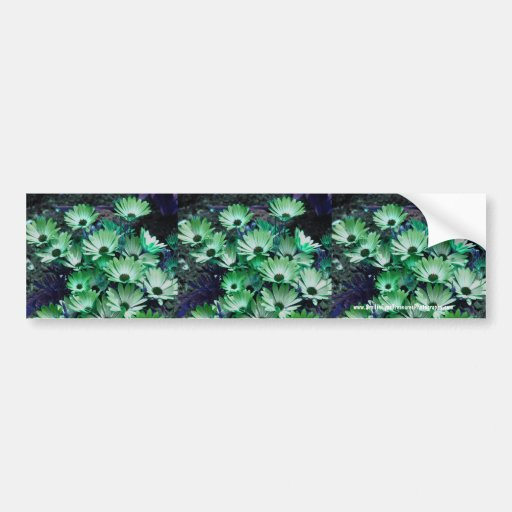 Green Daisies Flower Bumper Sticker Car Art