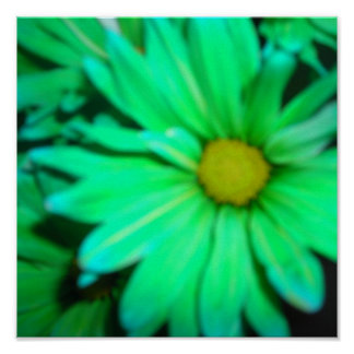 Green Daisy Close Up Posters