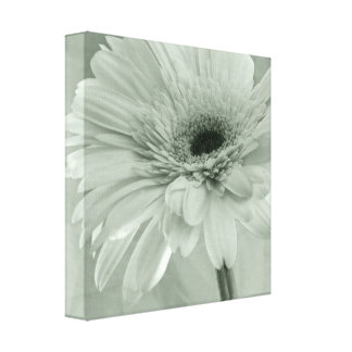 Green Daisy Wrapped Canvas Print