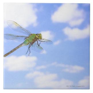 Green darner (Anax junius) flying against Ceramic Tile