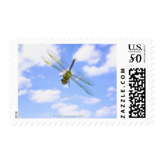 Green darner (Anax junius) flying against clouds Postage