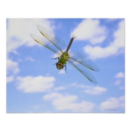 Green darner (Anax junius) flying against clouds Poster