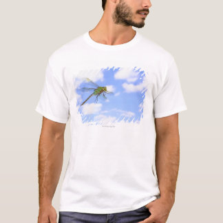Green darner (Anax junius) flying against T-Shirt