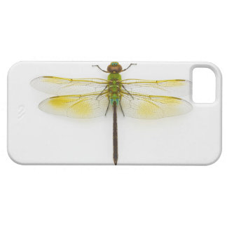 Green darner (Anax junius) on white background, iPhone 5 Covers
