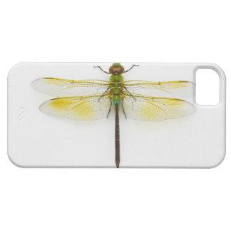 Green darner (Anax junius) on white background, iPhone SE/5/5s Case