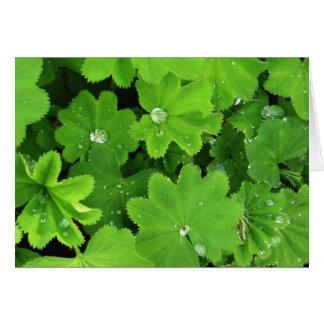 Green Dewdrops Card