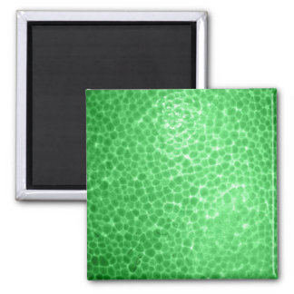 Green dragon skin, looks like dinosaur leather! magnet