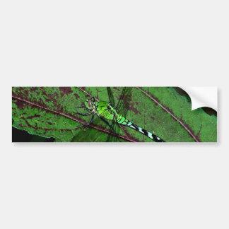 Green Dragonfly Bumper Sticker