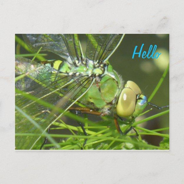Green Dragonfly HELLO Postcard