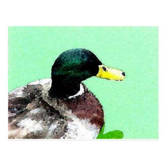 Green duck postcard