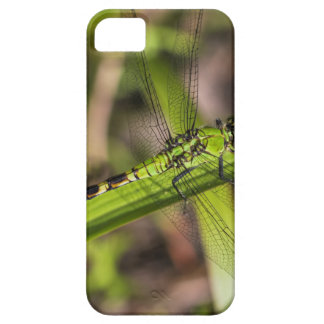 Green Eastern Pondhawk Dragonfly iPhone SE/5/5s Case