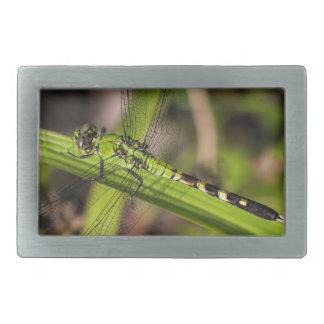 Green Eastern Pondhawk Dragonfly Rectangular Belt Buckle