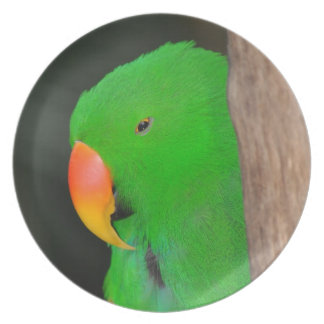 Green eclectic parrot melamine plate