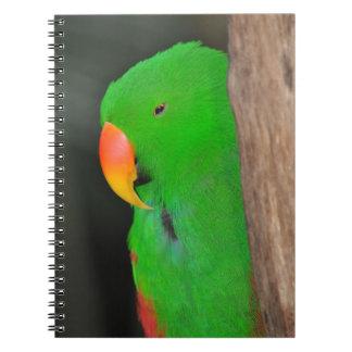 Green eclectic parrot notebook