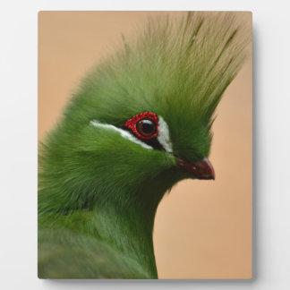 Green Exotic Bird Plaque