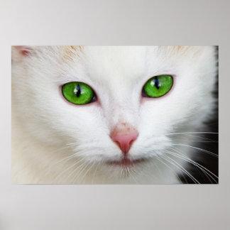 Green Eye Kitty Poster