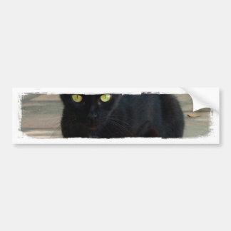 Green Eyed Black Cat; No Greeting Car Bumper Sticker