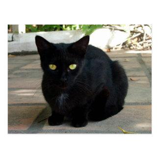 Green Eyed Black Cat; No Greeting Postcard