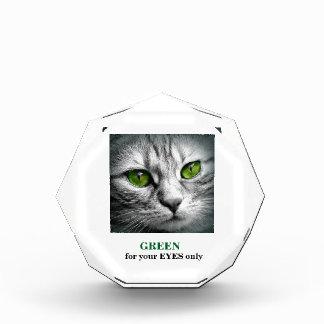 green eyed cat award