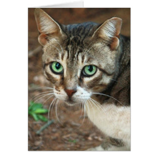 Green Eyed Cat Card