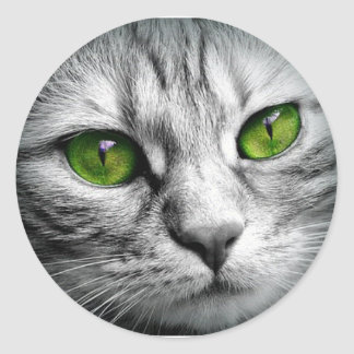 green eyed cat classic round sticker