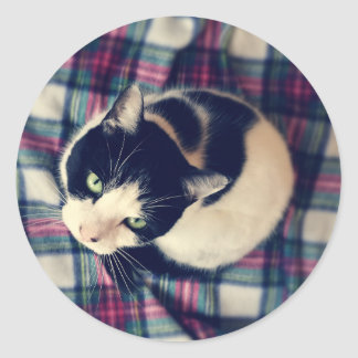 Green Eyed Cat Photo Stickers