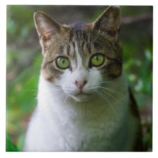 Green-eyed cat portrait ceramic tile