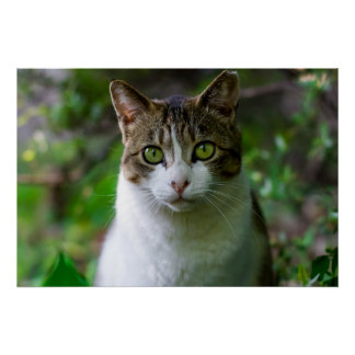 Green-eyed cat portrait poster