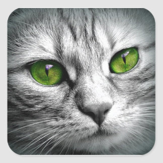 green eyed cat square sticker