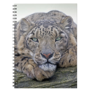 Green-Eyed Gaze Notebook