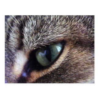 Green-Eyed Gray Tabby Cat Eye Close-Up Postcard