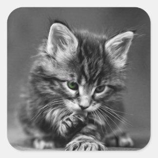 Green Eyed Kitten Square Sticker
