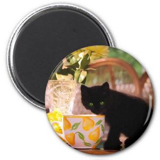 Green Eyed Kitten Stilllife 2 Inch Round Magnet