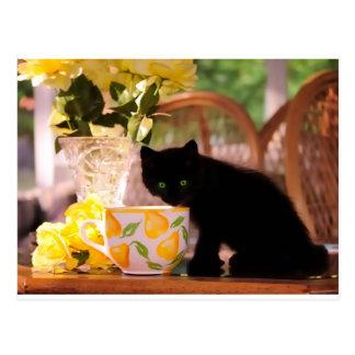 Green Eyed Kitten Stilllife Postcard