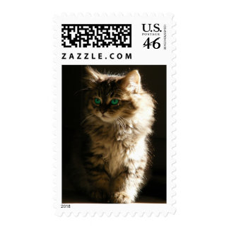 Green eyed kitty Stamps