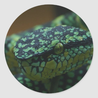 Green-Eyed Snake Round Stickers