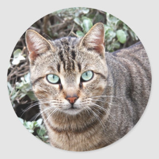 Green eyed Tabby Cat large stickers