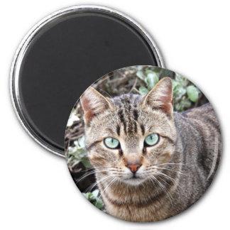 Green eyed Tabby Cat Magnet