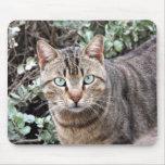 Green eyed Tabby Cat mousepad